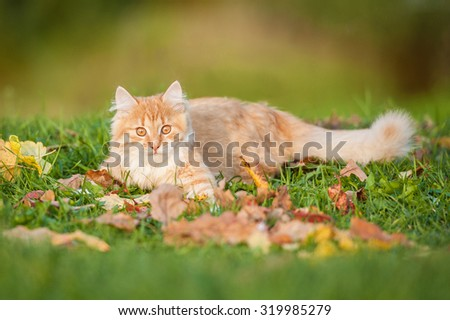 Little red cat lying on the leaves in autumn - stock photo