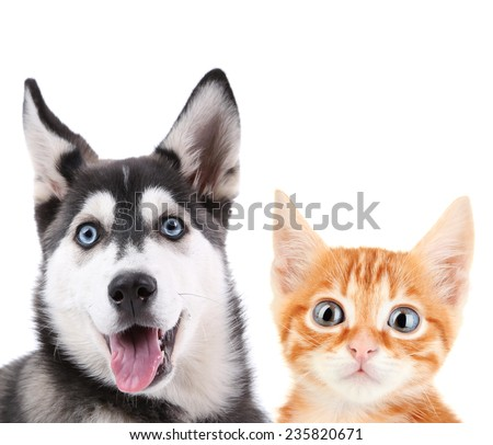 Little red kitten and  husky puppy isolated on white - stock photo