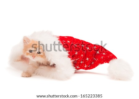 Little red kitten in a Christmas hat - stock photo