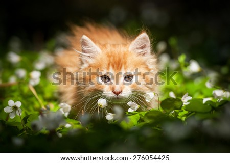 Little red kitten in flowers - stock photo