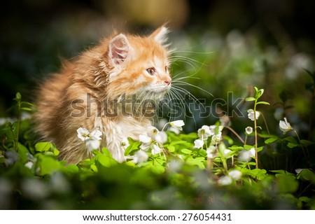 Little red kitten in flowers - stock photo