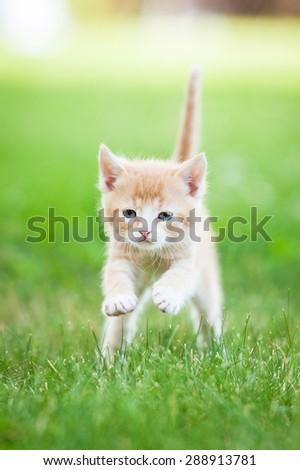 Little red kitten running outdoors in summer - stock photo