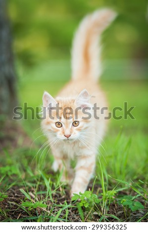 Little red kitten walking outdoors in summer - stock photo