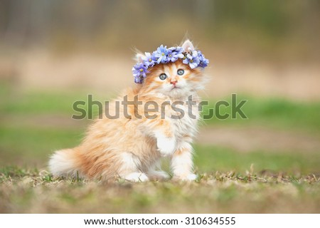 Little red kitten with wreath of blue flowers on its head - stock photo