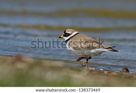 Little Ringed Plover, Charadrius dubius. - stock photo
