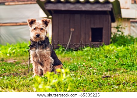 Little sad dog on a chain sitting in front of their booth - stock photo