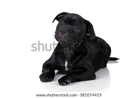 Little sad puppy on a white background - stock photo