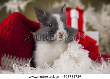 Little santa bunny on Christmas background