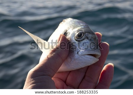 Little sea bream in fisherman hand in front of blue sea background - stock photo
