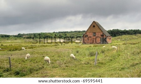 Little shed at the countryside surrounded by grazing sheep