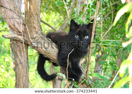 little small black cat kitten sitting hiding playing on the tree with green leaves, nature background wallpaper - stock photo