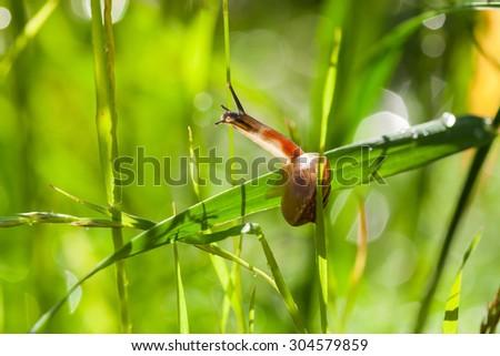 Little snail on wet green grass. Shallow depth - stock photo