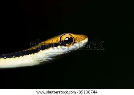little snake in green nature or in forest