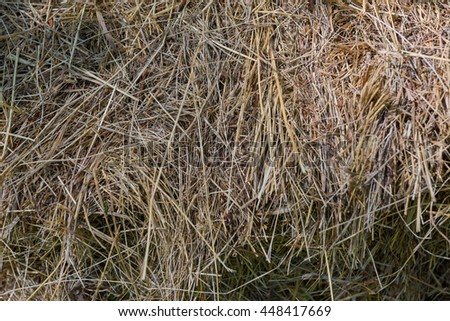 Little stack of hay in green summer forest background - stock photo