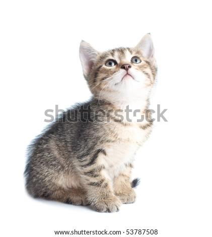 Little striped kitten looking up - stock photo