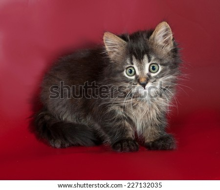 Little striped kitten sitting on red background