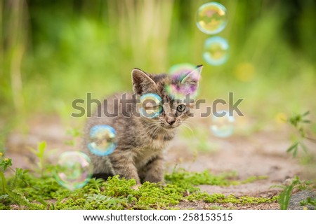 Little tabby kitten and soap bubbles - stock photo