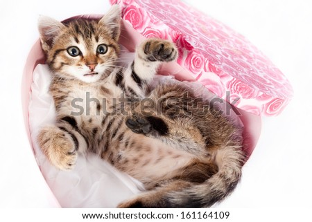 Little Tabby Kitten Playing in the gift box in the shape of heart - stock photo