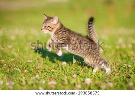 Little tabby kitten running on the lawn - stock photo