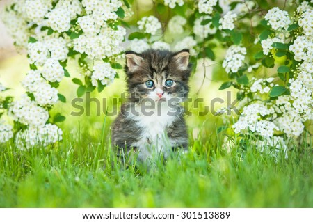 Little tabby kitten sitting in flowers - stock photo