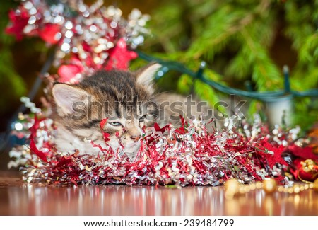 Little tabby kitten sleeping near a christmas tree - stock photo