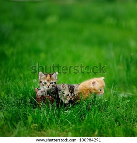 little tabby kittens  on green grass - stock photo