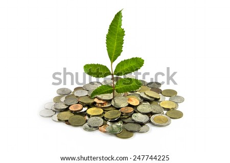 little three plant grow on a thai money coins - stock photo