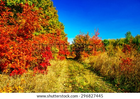 Little track of autumn in the forest. - stock photo