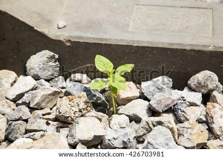 Little tree grow in the rock - stock photo