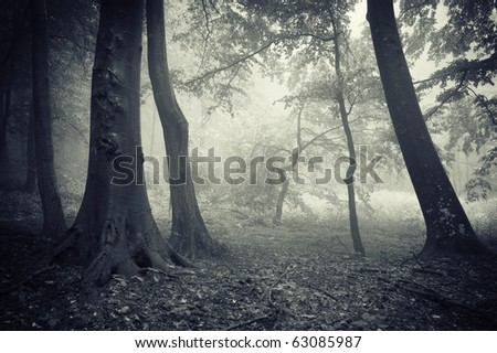 little tree in a forest - stock photo