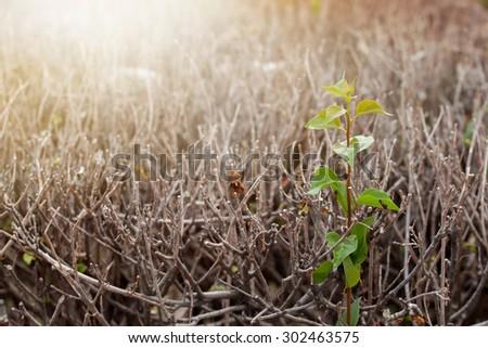 Little tree on dead trees, hope - stock photo