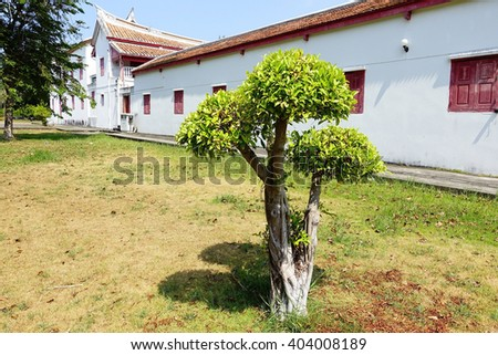 Little  tree with museum background:Close up,select focus with shallow depth of field - stock photo