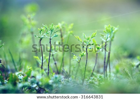 little trees in forest. Vintage nature background - stock photo