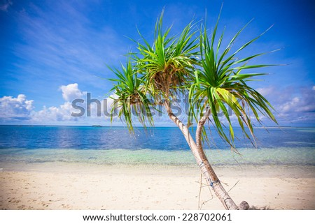 Little tropical coconut palm tree in desert island