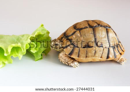 Little Turtle - stock photo
