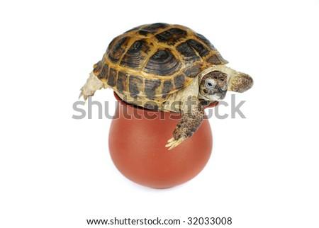 little turtle on a pot - stock photo