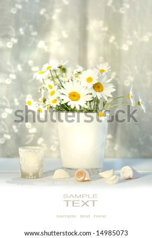Little white daisies and seashells with white lace curtains - stock photo