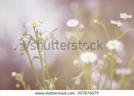 Little white daisy flower and grass for nature vintage sadness abstract background - stock photo