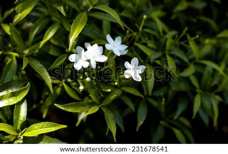 Little white flower stock photo royalty free 231678541 shutterstock little white flower mightylinksfo