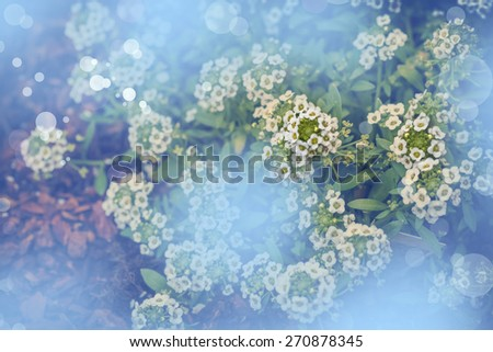 Little white fuzzy flowers, Spring bloom of a tree, Spring nature background - stock photo