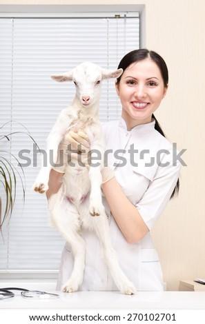 Little white goat at the vet - stock photo