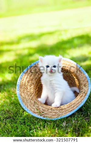 Little white kitten in a hat on the grass in sunny day, - stock photo