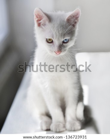 little white kitten on white background - stock photo