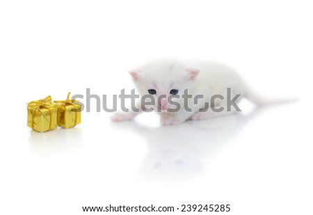 Little white kitten 2 week age isolated on white background