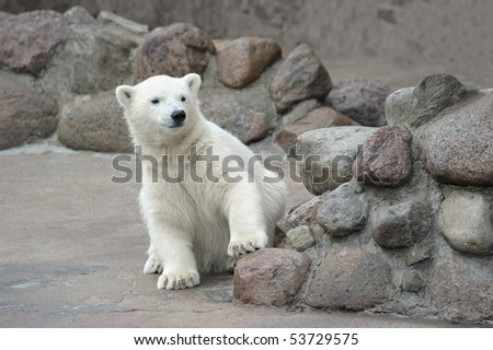 Little white polar bear - stock photo