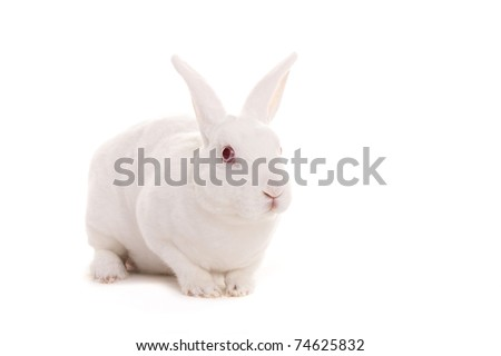 Little white rabbit - stock photo