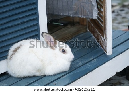 Little white rabbit on wooden.