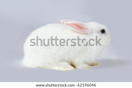 Little white rabbit sits on grey background