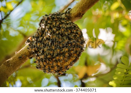 Little wild hive with bees on tree  - stock photo
