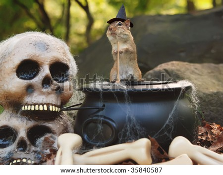 little witch chipmunk stirs up a spell in a cauldron - stock photo